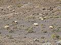 Gran Valle - Jandia - Fuerteventura - 06.jpg