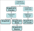 Grapefruit's family from annoying orange.png