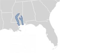 Pascagoula map turtle - Image: Graptemys gibbonsi map