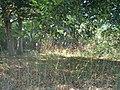 Grasses - panoramio.jpg