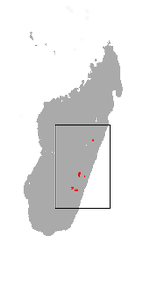 Greater Bamboo Lemur area.png