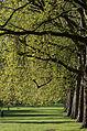 Green Park à Londres.jpg