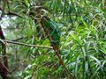 Green cameleon.JPG