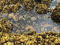 Gwaii Haanas National Park (26946045113).jpg