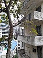 HK ML 香港半山區 Mid-levels 上亞厘畢道 1-3 Upper Albert Road yellow buildings April 2020 SS2 15.jpg