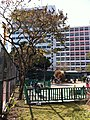 HK YMT 油麻地 Shanghai Street Market Street Playground 上海街遊樂場 view Yau Ma Tei Jockey Club Clinic n trees Jan-2014.JPG