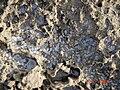 HaBonim-Dor beach reserve DSC00520.JPG