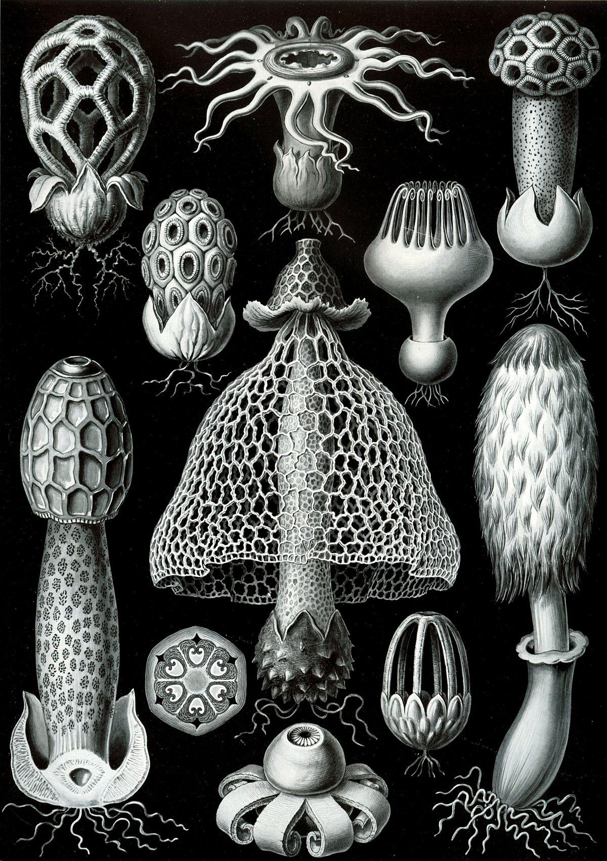 Basidiomycota - Wikipedia