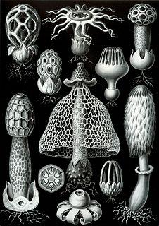 Basidiomycota Division of fungi