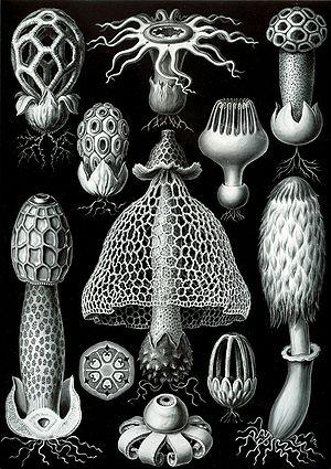 Basidiomycota - Basidiomycetes from Ernst Haeckel's 1904 Kunstformen der Natur
