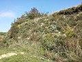 Halbtrockenrasen und Weingärten nördlich Oberthern sl1.jpg