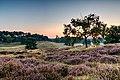 Haltern am See, Westruper Heide -- 2015 -- 8236-40.jpg