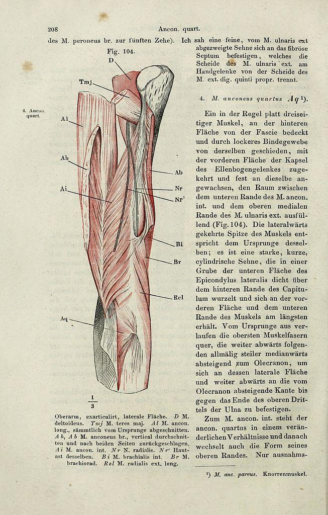 Ungewöhnlich Bindegewebskapsel Bilder - Menschliche Anatomie Bilder ...