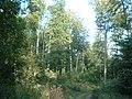 Harbke Forst Im Bärengrund - panoramio - Gottfried Hoffmann -….jpg