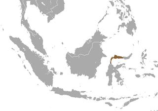 Hecks macaque Species of Old World monkey