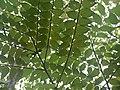 Hed (Marathi- हेद) (4780293954).jpg