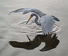 heron wikipedia