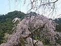 Hese-tera Temple 長谷寺 - panoramio.jpg