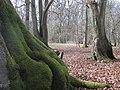 Hodgemoor Wood (2312821417).jpg