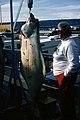 Homer Alaska (50042621803).jpg