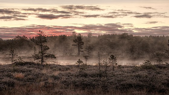 Fog rising over the Mukri bog near Mukri, Estonia. The bog has an area of 2,147 hectares (5,310 acres) and has been protected since 1992. Hommik Mukri rabas.jpg