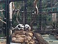 Hong Kong Zoological and Botanical Gardens 16.jpg