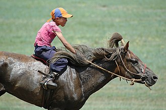 Mongolian horse - Child racing at the Naadam festival. The horse's forelock is put up into a topknot in the traditional race style.