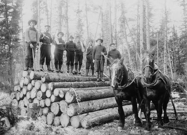 Horses hauling timber Ontario