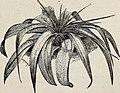 120px-Horsford%27s_descriptive_catalogue