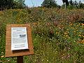 Hugelkultur arboretum.jpg