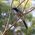 Huntington Gardens 33 - bird.jpg