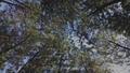Hutan di Gunung Arjuno.png