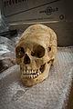 INRAP présentation fouilles Obernai 6000 ans occupation 24 octobre 2013 21.jpg