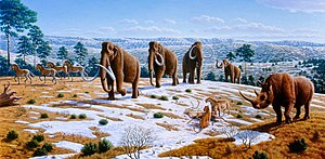 Pleistocene - Pleistocene of Northern Spain showing woolly mammoth, cave lions eating a reindeer, tarpans, and woolly rhinoceros.