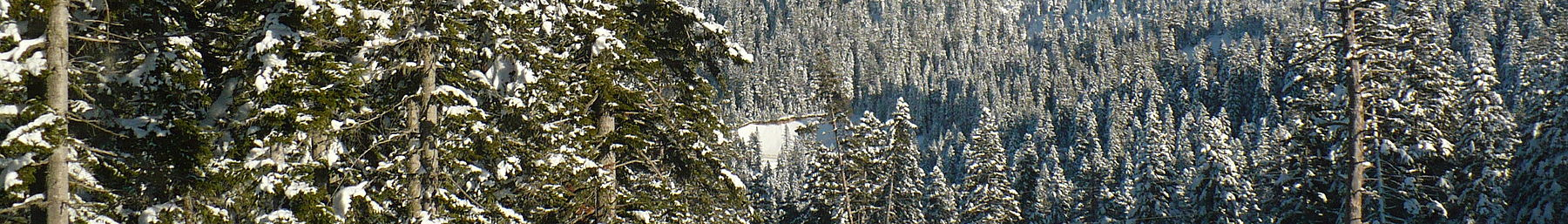 Spruce forests of Ilgaz