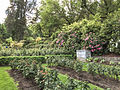 International Rose Test Garden, Portland, Oregon (23738581470).jpg