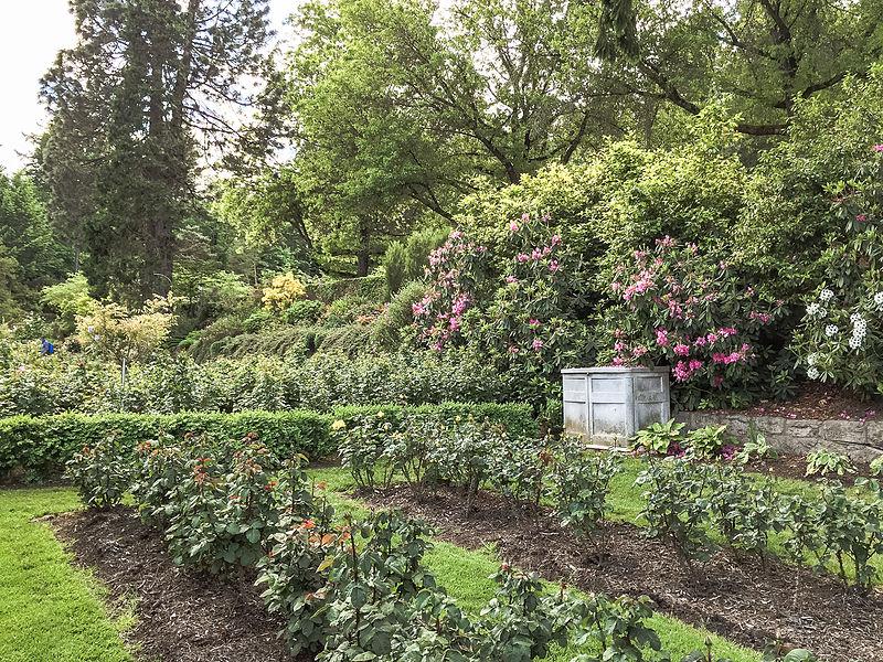 File:International Rose Test Garden, Portland, Oregon (23738581470 ...