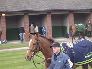 Intersky Falcon British-bred Thoroughbred racehorse