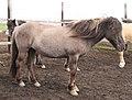 Island-Pferde-08-2018-gje.jpg