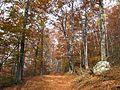 Jablanik - zapadna Srbija - mesto Debelo brdo - Na putu ka vrhu Jablanika - Bukova šuma u jesen 2.jpg