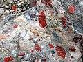 Jasper-quartz pebble conglomerate (Lorrain Formation, Paleoproterozoic, ~2.3 Ga; Ottertail Lake Northeast roadcut, near Bruce Mines, Ontario, Canada) 38 (32766102277).jpg