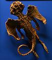 Jenny Haniver Museum Histoire Naturelle Genève 22102014.jpg