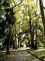 Jesenná cesta - panoramio.jpg