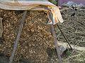 Jiangxia-peanuts-harvested-9699.jpg