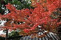 Jingo-ji (7066695097).jpg