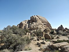 Joshua-Tree-Nationalpark