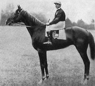Ksar (horse) horse