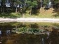 Kaali vesiroosid õitsevad - 2014-07-29 15.38.43 - panoramio.jpg