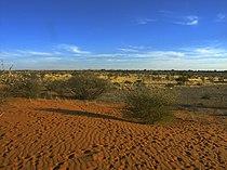 Kalahari PICT0036.JPG