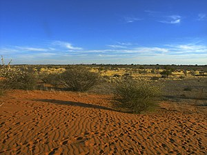 Landschaft der Kalahari
